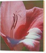Flower In Pink Pastel Wood Print