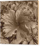 Flower In Sepia Wood Print