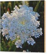 Flower In The Field  Wood Print