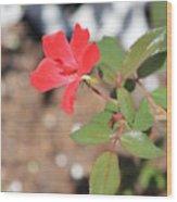 Flower In The Garden Wood Print