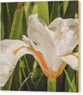 Flower In The Grass Wood Print