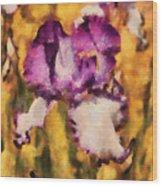 Flower - Iris - Diafragma Violeta Wood Print
