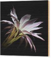Flower Of Cactus Wood Print