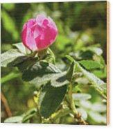 Flower Of Eglantine - 2 Wood Print