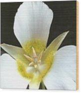 Flower Of Sunshine Wood Print