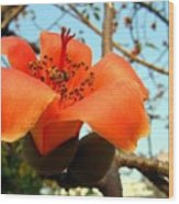 Flower Of The Red Silk Cotton Tree  Wood Print