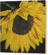 Flower Of The Sun Too Wood Print