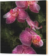 Flower - Orchid - Phalaenopsis - The Cluster Wood Print