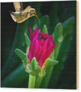Flower-p Wood Print