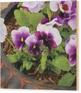 Flower - Pansy - Purple Pansies Wood Print
