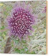 Flower Photograph Wood Print