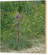 Flower Photograph00 Wood Print
