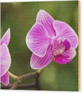 Flower - Pink Orchids Wood Print