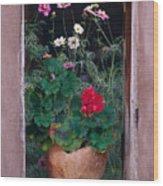 Flower Pot In Window Wood Print