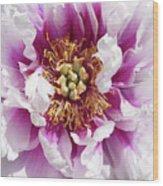 Flower Power In Pink Wood Print