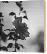 Flower Silhouette Wood Print