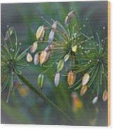 Flower Spray Wood Print