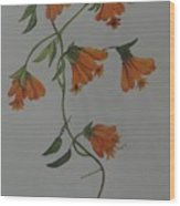 Flower Stem Plucked From Neighbours Garden Wood Print