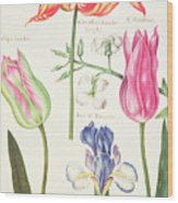Flower Studies  Tulips And Blue Iris  Wood Print