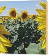 Flower Sunflower,yellow Flower, Wood Print