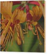 Flower Tongues Wood Print