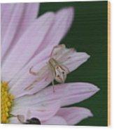 Flower Trap Wood Print