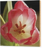 Flower Tulip Wood Print
