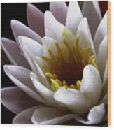 Flower Waterlily Wood Print