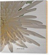 Flower-white Wood Print