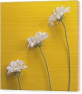 flower, white, three, online, Yellow Background, lateral, vertic Wood Print