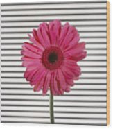 Flower With Lines Wood Print
