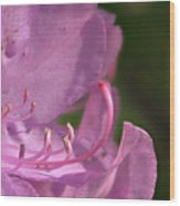 Flower With Pistil And Stamens Displayed Wood Print