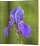 Flower1 Wood Print