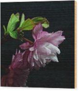 Flowering Almond 2011-15 Wood Print