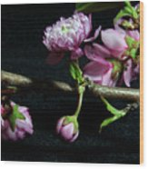 Flowering Almond 2011-16 Wood Print
