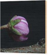 Flowering Almond 2011-20b Wood Print