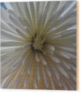Flowering Burst Wood Print