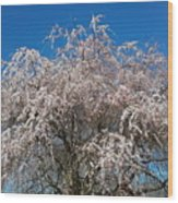 Flowering Cherry  Wood Print