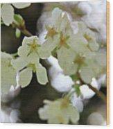 Flowering Cherry Tree 17 Wood Print