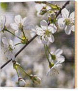 Flowering Cherry Tree Branch 4 Wood Print