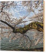 Flowering Cherry Tree Wood Print