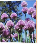 Flowering Chives Wood Print