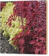 Flowering Coleus Wood Print