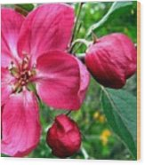 Flowering Crab Apple Wood Print