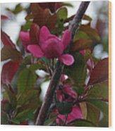 Flowering Crabapple Wood Print