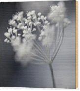 Flowering Dill Cluster Wood Print