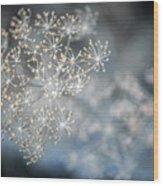 Flowering Dill Macro Wood Print