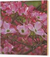 Flowering Dogwood Flowers 01 Wood Print