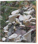 Flowering Fungi Wood Print