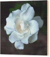 Flowering Gardenia Wood Print